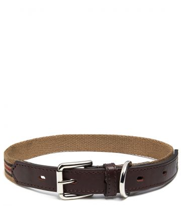Webbing Dog Collar