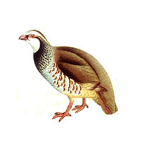 A Guide to Game Birds | Purdey & Sons